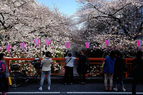 目黒川の桜 2014