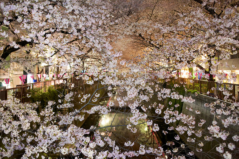目黒川の桜 2014 夜